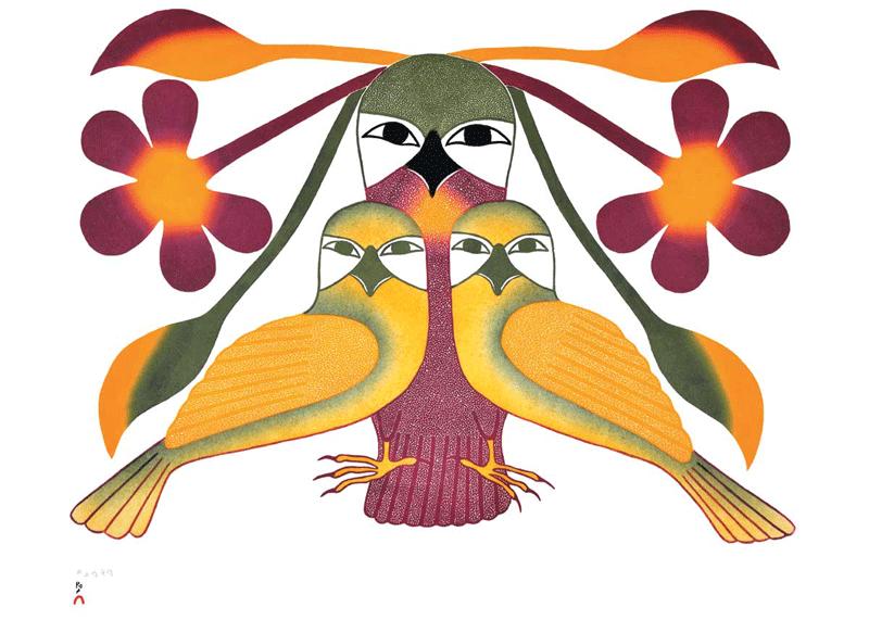 努纳武特的鸟