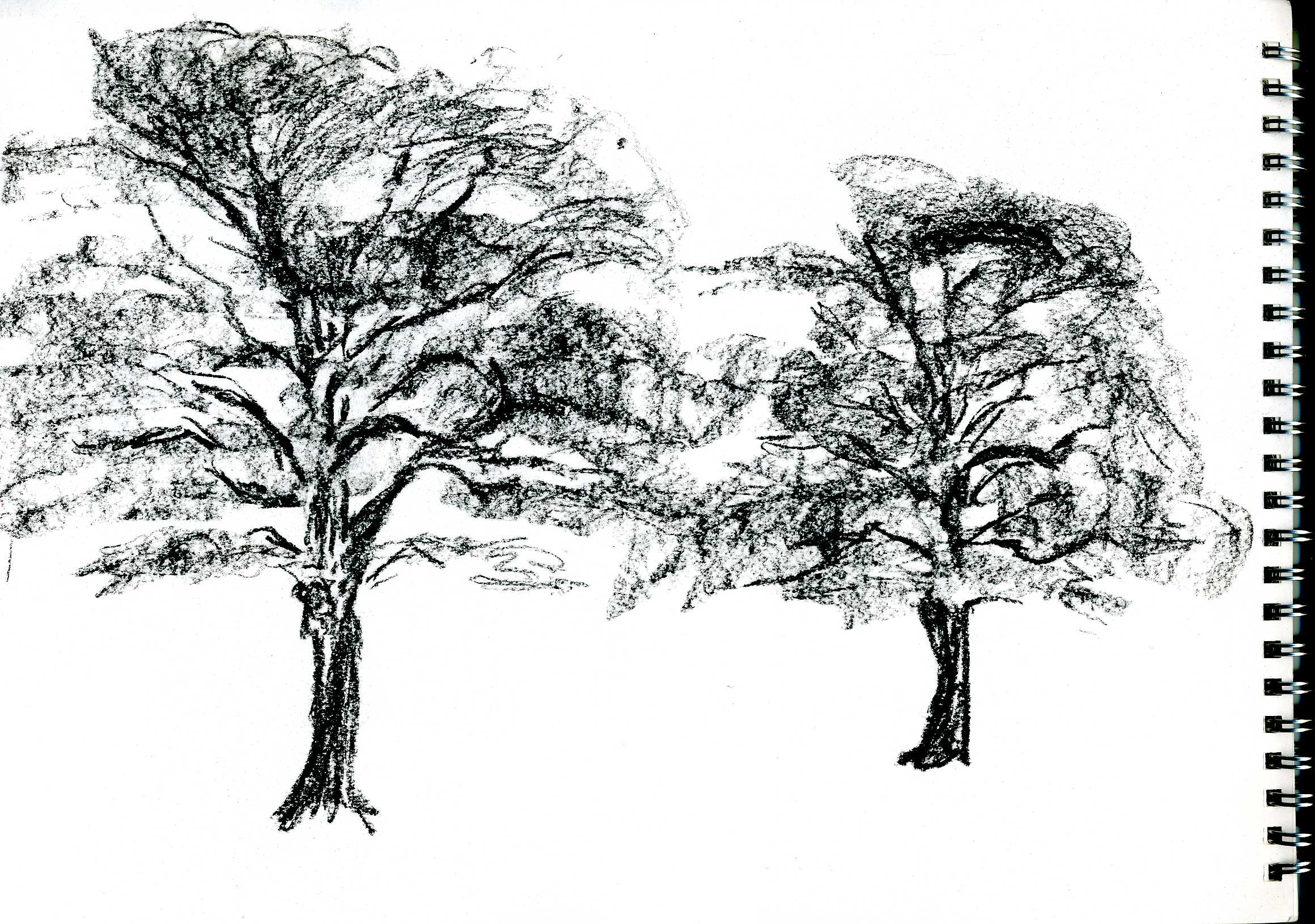 Project Drawing Trees