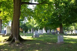verdant trees and grass at a cemetery in Auburn, NY