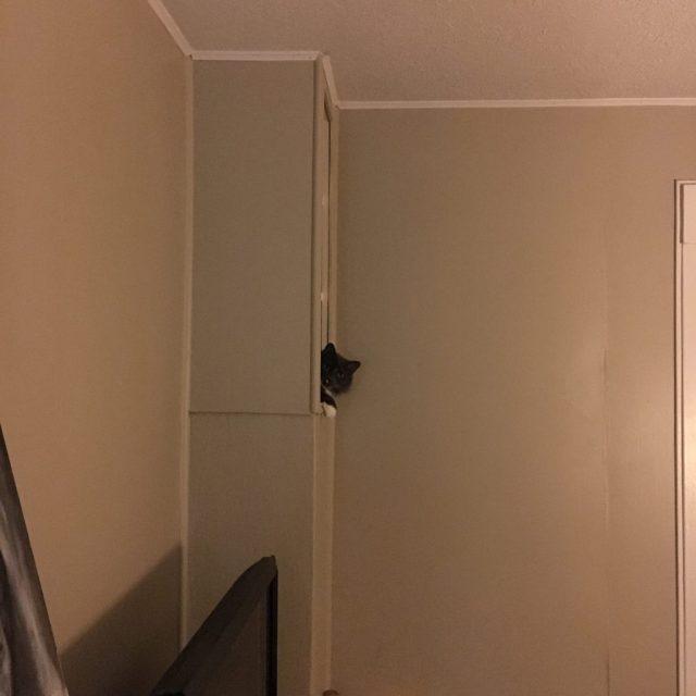 d-shelf03