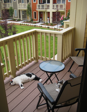 Cats_Outside