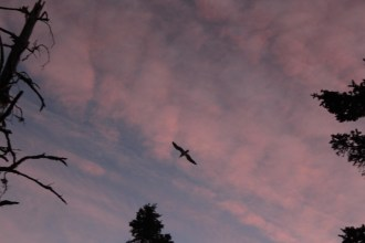 Soaring the pink sky