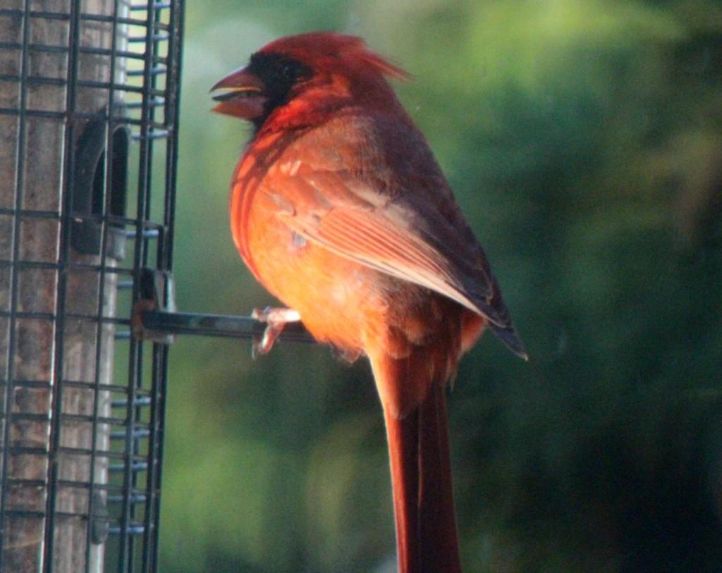 Consistent cardinal