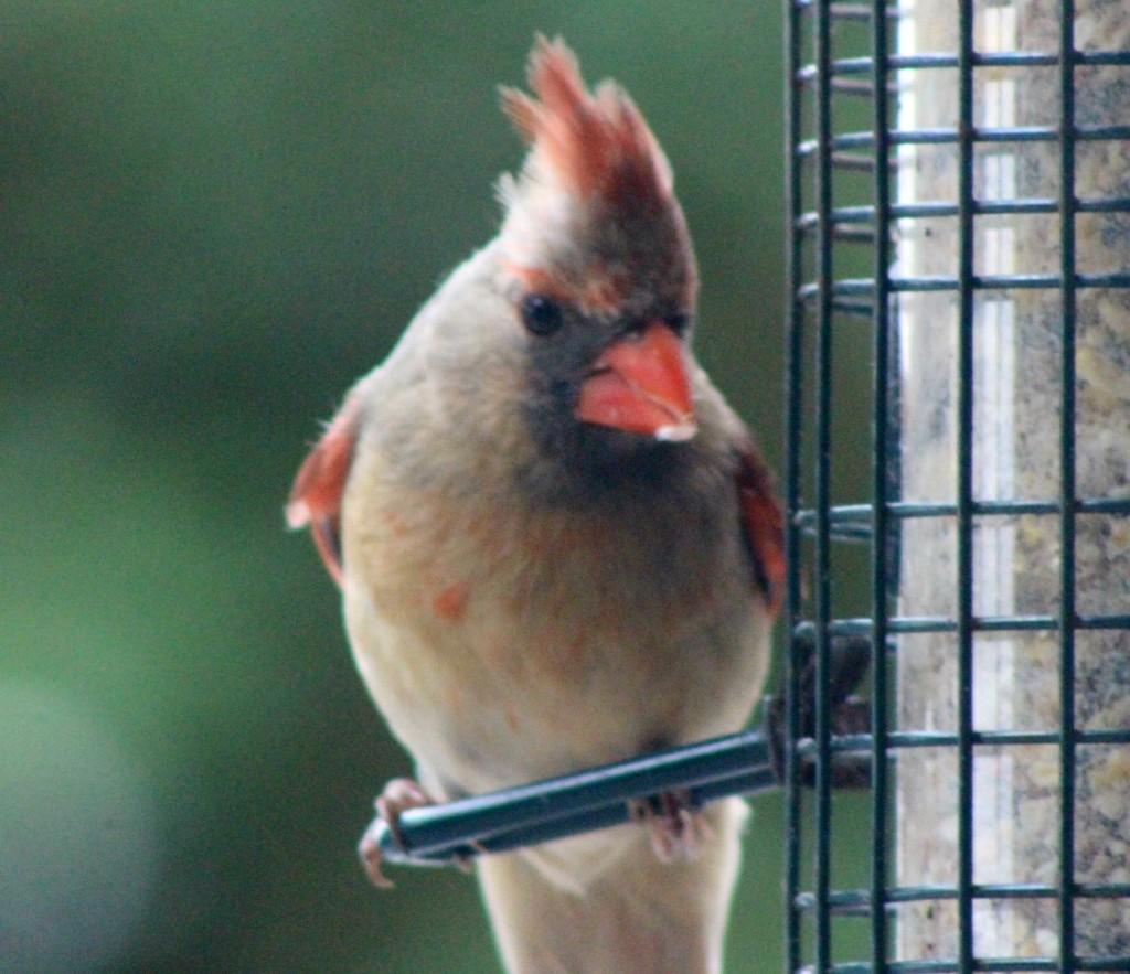 Cardinal24