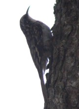 Bird16
