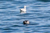 Seal25