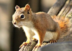 Squirrel6