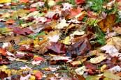 Leaves14