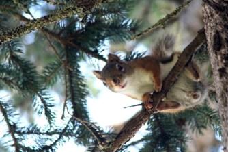 IMG_4788Squirrel