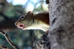 IMG_4793Squirrel