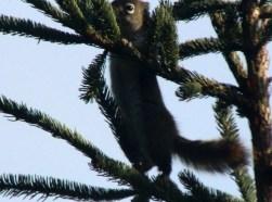IMG_0854Squirrel