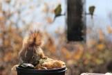 IMG_3336Squirrel