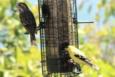 IMG_4484Finches