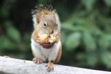 IMG_4190Squirrel