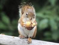 IMG_4191Squirrel