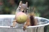 IMG_4200Squirrel