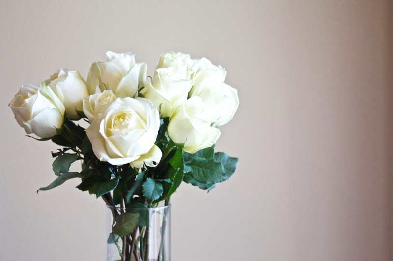 Simplify your life roses