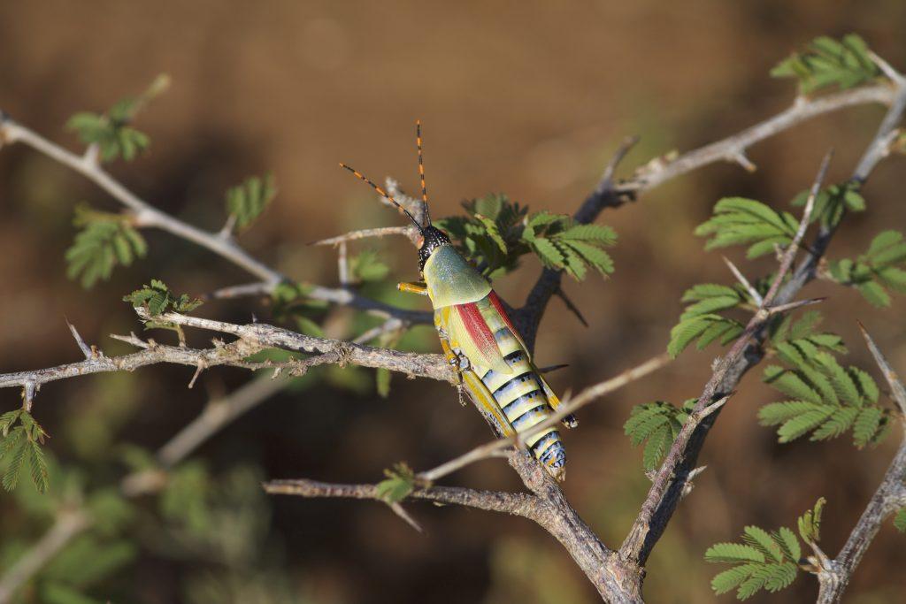 safari impodimo madikwe
