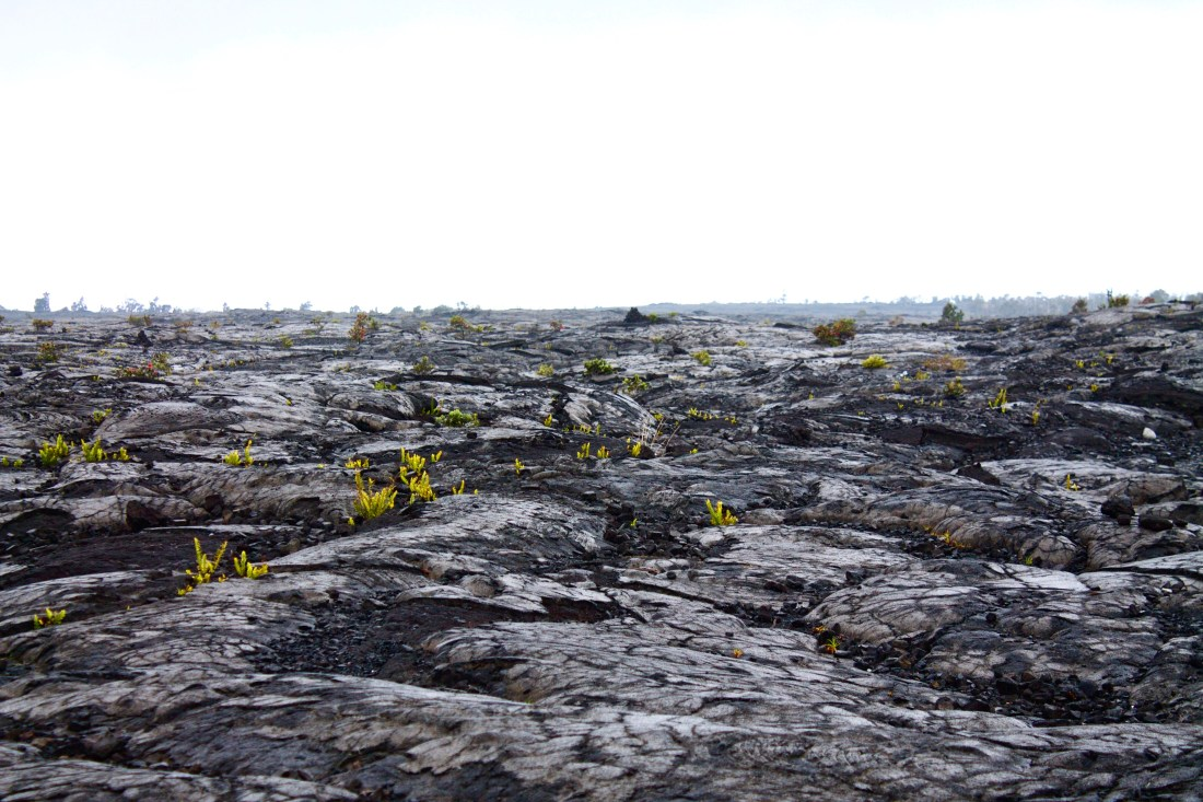 Volcanoes National Park Hawaii Lava field