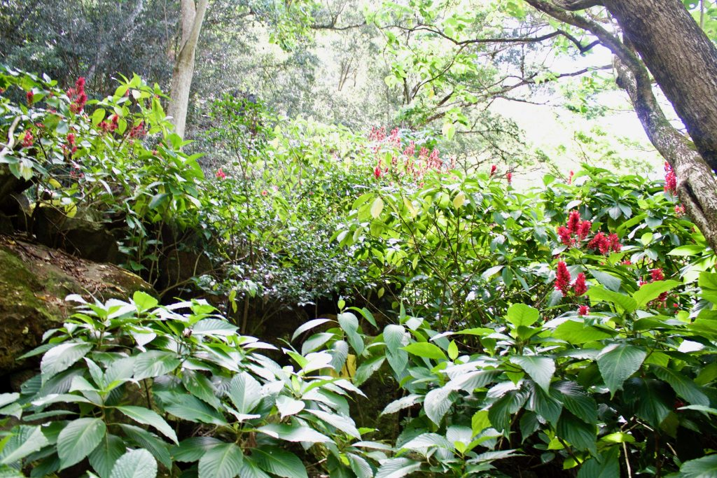 Waimea Valley Oahu Hawaii in 5 days
