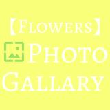 【草花】はなこのフォトギャラリー(2)
