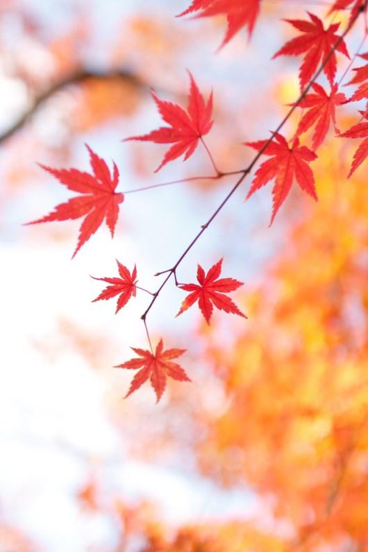 対角線構図で撮った紅葉