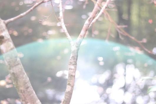 木の枝とゴースト