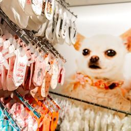 Nederlander laat kassa rinkelen bij juwelier, opticien en dierenwinkel