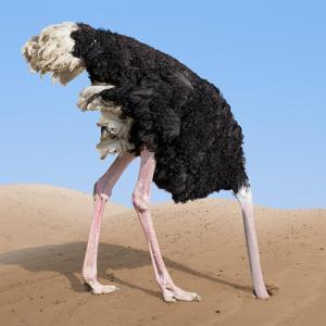 Pop culture burrow head in sand