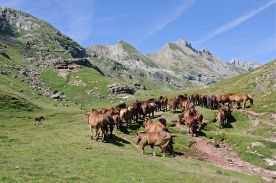 800px-Chevaux_estive_Pyrenees