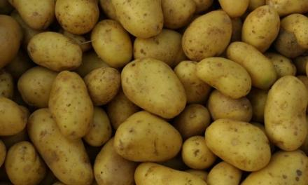 Starting Potato Farming Business In Zimbabwe and the Business Plan