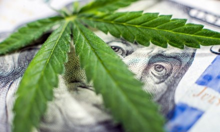 Cannabis business: 37 Mbanje investors to be licenced!