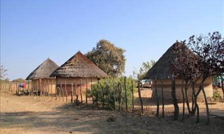 Top rural business opportunities in Zimbabwe