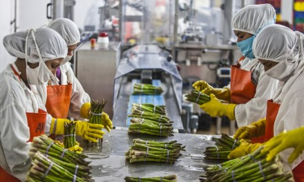 Top Agro Processing/Value Addition Business Opportunities In Zimbabwe