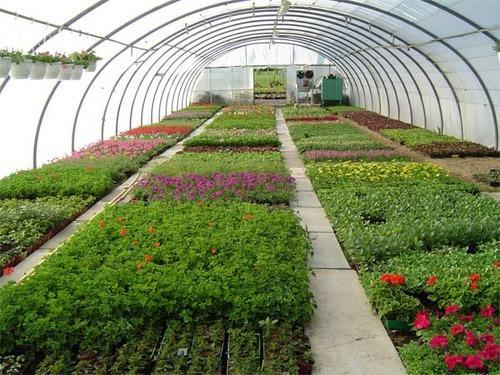 10 Horticulture Business Opportunities In Zimbabwe