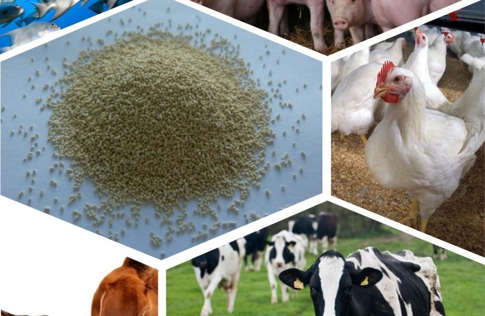 Livestock feed business idea for Zimbabwe