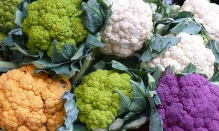 Cauliflower Farming in Zimbabwe