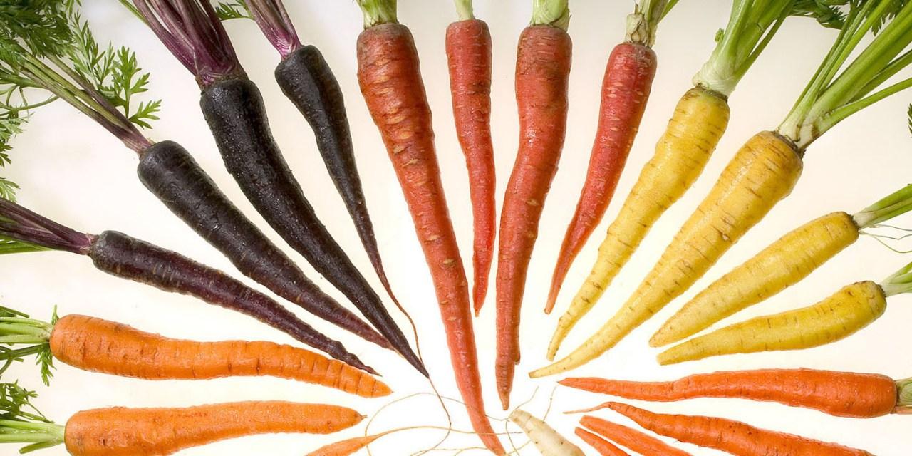 Carrot Farming in Zimbabwe