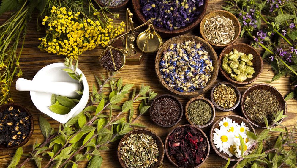 Medicinal herbs and shrubs to grow in Zimbabwe