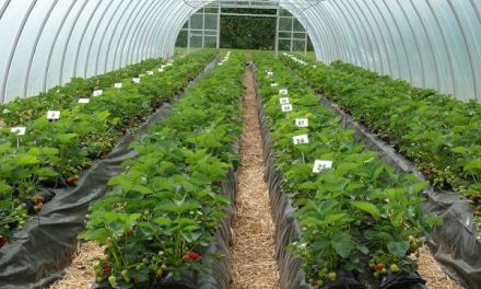 Greenhouse Farming In Zimbabwe