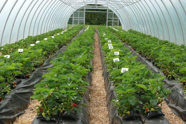 Greenhouse Farming In Zimbabwe