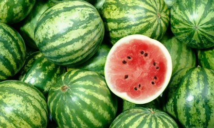 Starting A Watermelon Farming Business In Zimbabwe