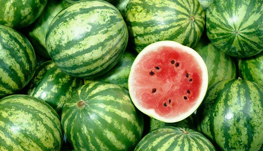 Starting A Watermelon Farming Business In Zimbabwe