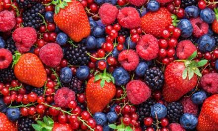 Exploring The Prospects Of Berries Farming In Zimbabwe