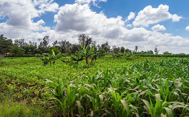 10 Small Scale Farming Ideas In Zimbabwe