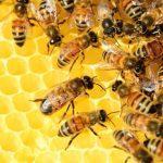 Starting Honey Beekeeping Farming Business Plan (PDF)