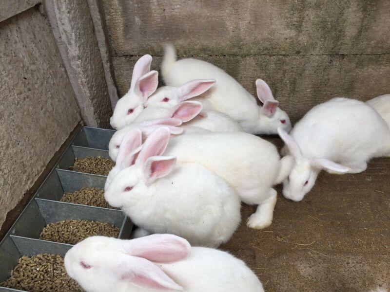 rabbit farming business plan pdf