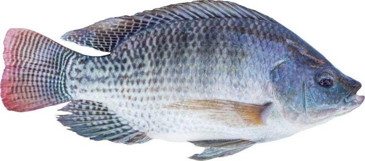 Tilapia Fish Farming Business Plan PDF