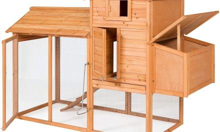 Top 10 Best Chicken Coops in 2020