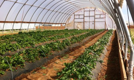 How To Start A Greenhouse Vegetable Farming Business